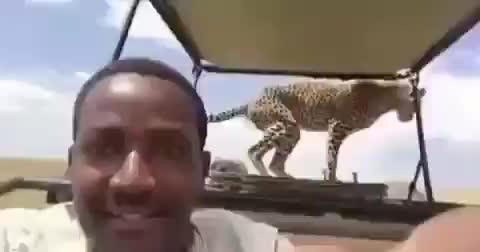 Dude has an incredible sighting on a safari GIFs