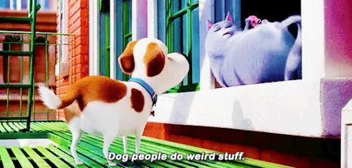 Pets GIFs
