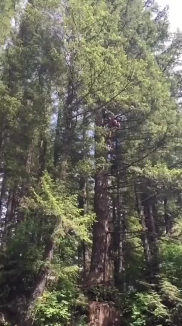 Watch and share Reddit Post Title [2x] GIFs on Gfycat