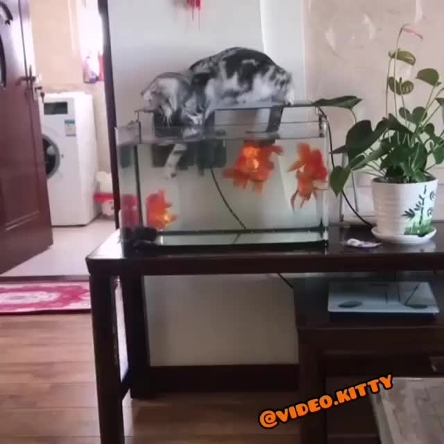 Watch and share Catoftheday GIFs and Catstagram GIFs by Artmia on Gfycat