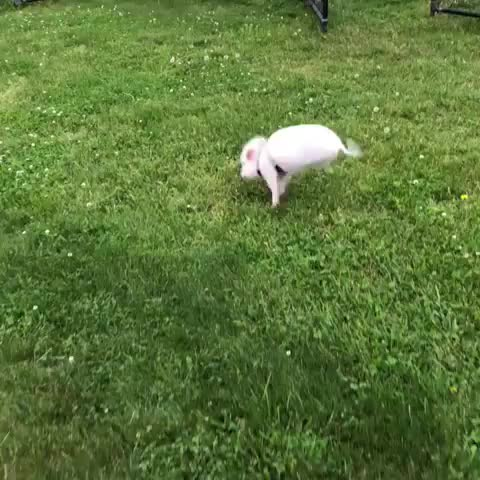 friendsnotfood, govegan, livekindly, piggylove, stella max johnson, When you're reunited with your best friend! GIFs