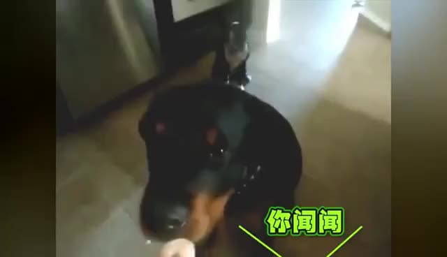 Watch and share 狗狗搞笑篇 GIFs on Gfycat