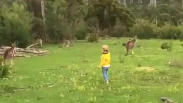 Chasing kangaroos in the land down under Submitted to FullScorpion by SlimJones123 View thread - subreddit - user on reddit.com      0 GIFs