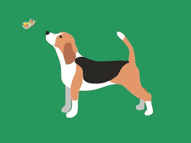Watch and share Beagle Dribb GIFs on Gfycat