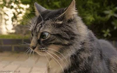 Watch Suspicious cat GIF by RandomCatGifs (@randomcatgifs) on Gfycat. Discover more shittyreactiongifs GIFs on Gfycat