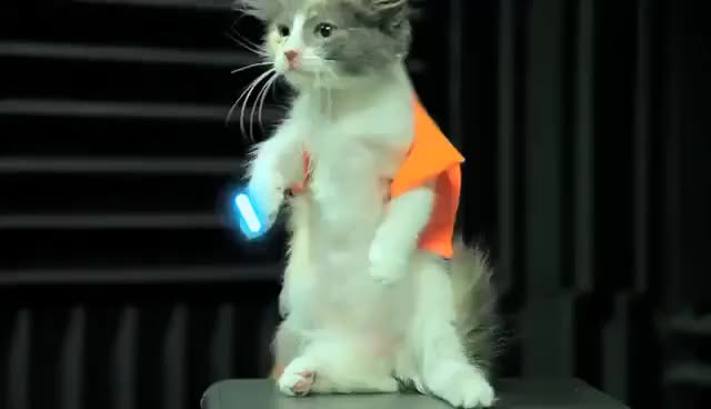 Watch and share Jedi Kitten GIFs on Gfycat