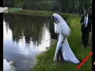 Watch bride GIF on Gfycat. Discover more related GIFs on Gfycat