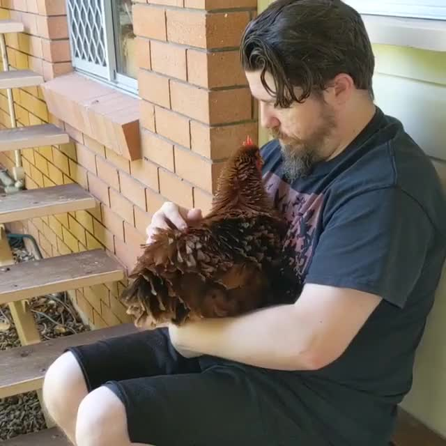 Watch and share Chicken Hug GIFs and Kindness GIFs by lnfinity on Gfycat