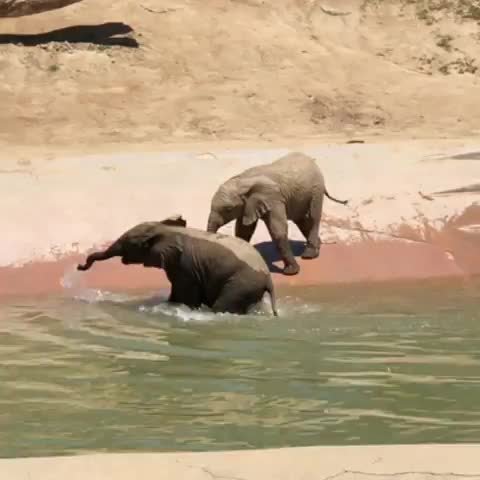 Watch Finally got to visit these little cuties on Sunday! ❤️🐘 GIF by PM_ME_STEAM_K3YS (@pmmesteamk3ys) on Gfycat. Discover more babyelephants, elissa 🌻, pachydermpair GIFs on Gfycat