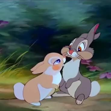 kissing rabbits cartoon GIFs