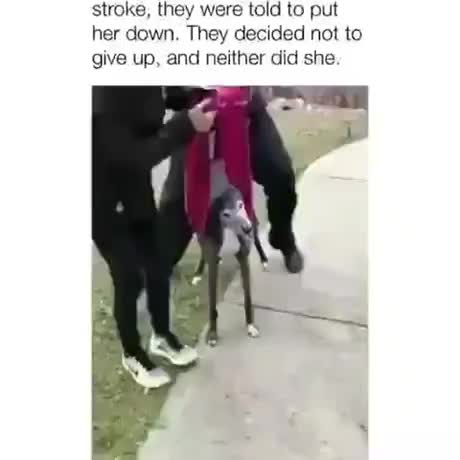 What a champ gif