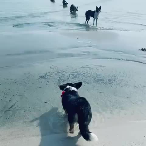 Watch and share Corgi GIFs and Dogs GIFs by GIFs For Everything on Gfycat