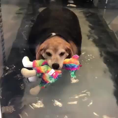 Watch and share Dog GIFs by vani  on Gfycat
