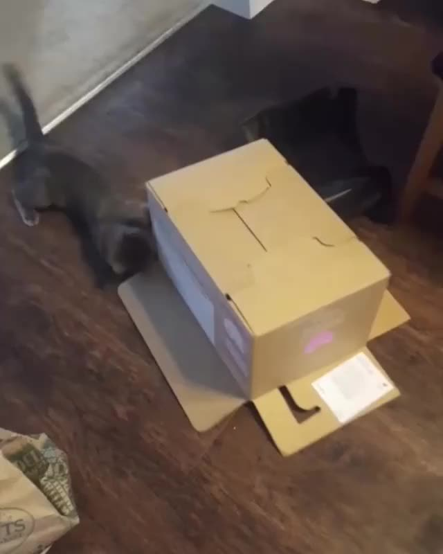 Watch /r/CatsBeingCats - Video by keeks944 GIF by @cakejerry on Gfycat. Discover more CatsBeingCats, aww, cats, cute GIFs on Gfycat