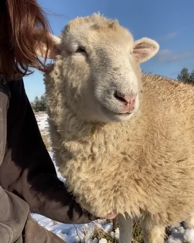 Watch and share Black Goat Farm Sanctuary GIFs by b12ftw on Gfycat