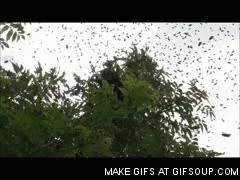 Watch and share Bee Swarm GIFs on Gfycat