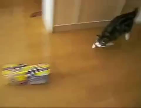 Watch Maru GIF on Gfycat. Discover more cat, maru GIFs on Gfycat