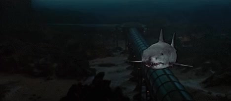 Watch shark GIF on Gfycat. Discover more related GIFs on Gfycat