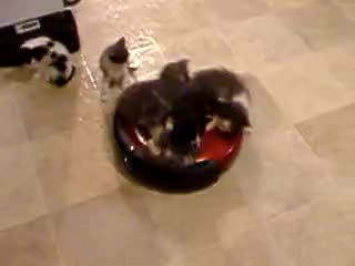 kittens, vacuum, Kittens on Vacuum GIFs