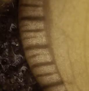 Watch Scientific Rudeness. GIF on Gfycat. Discover more Banana Slugs, Biology, Science, Slimes, Slugs GIFs on Gfycat