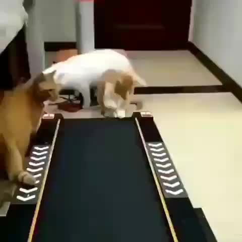 cats, funny, treadmill, Cats attempting to figure out a treadmill GIFs