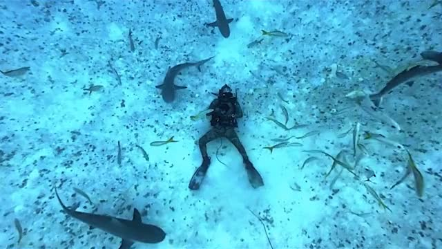 Watch and share Scuba Diving GIFs by solateor on Gfycat