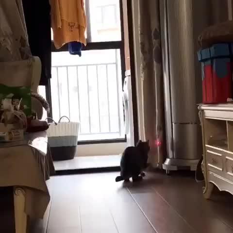 cat, funny, hanakitty🇯🇵ハナキティー, おやすみなさい😘いい夢に GIFs