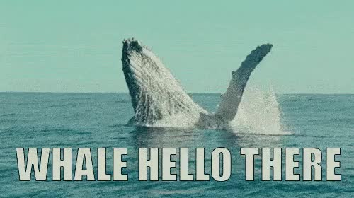 Watch and share Whale Hello GIFs on Gfycat