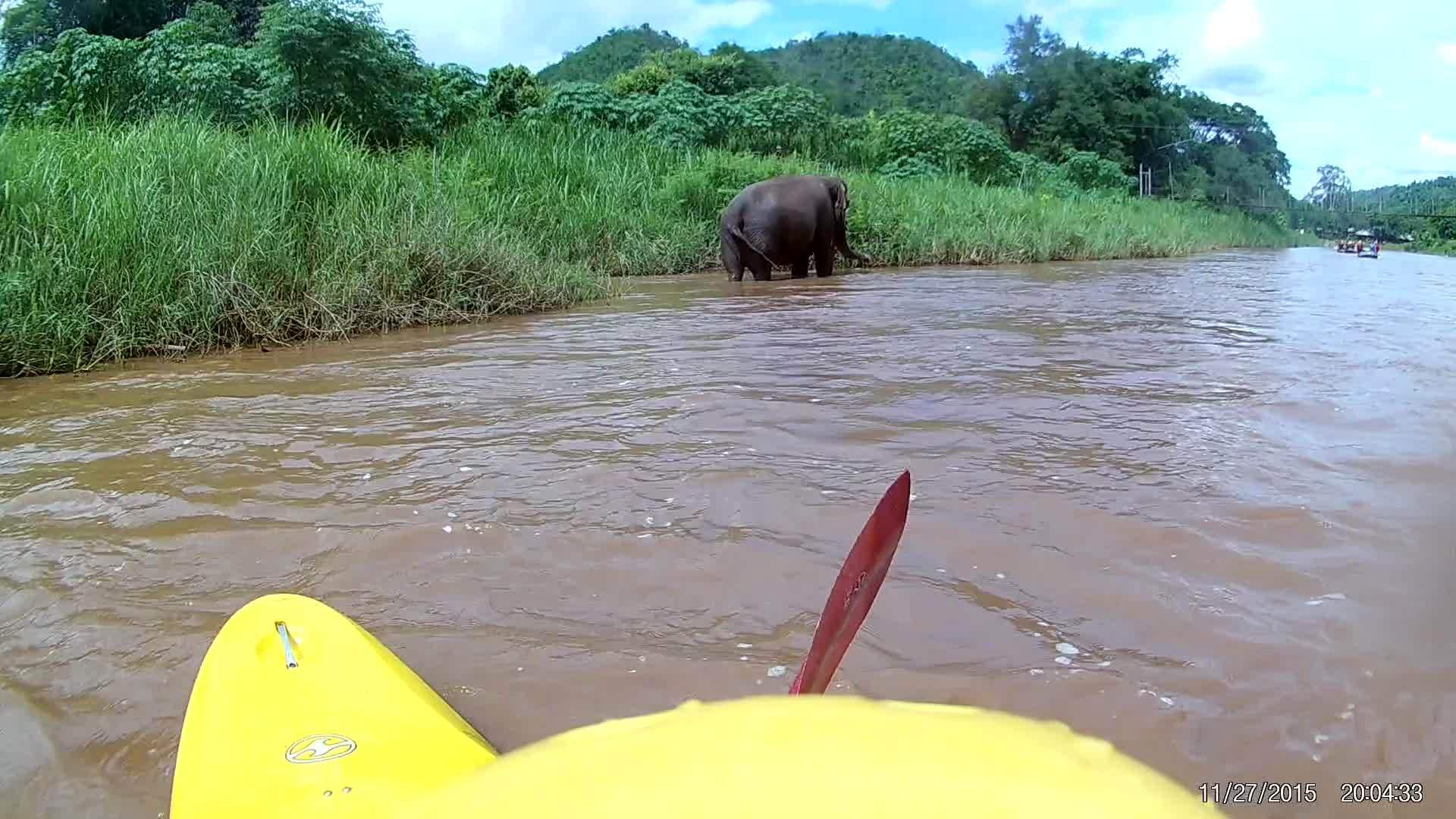 elephant, kayaking, Made a new friend in Thailand GIFs