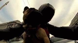 AnimalTextGifs, motorcycles, Hey! Hey you dog! I'm still cooler!!! (Stolen from r/ pics) (reddit) GIFs