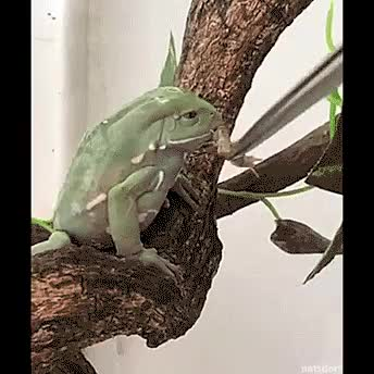 Watch and share Frog GIFs by paperboyUSA on Gfycat
