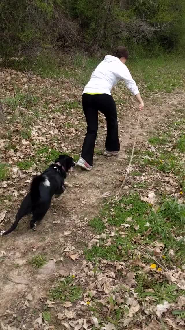 Watch and share Piper Zoomies! GIFs by repkam09 on Gfycat