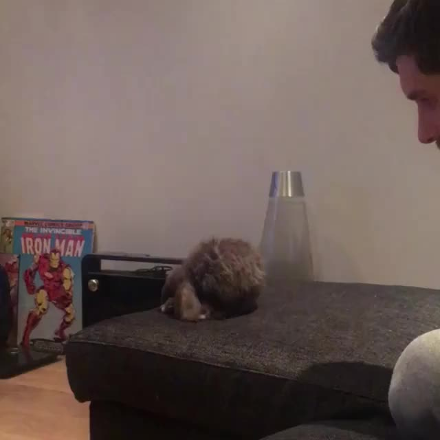 Watch and share Houserabbit GIFs and Cutevideos GIFs on Gfycat