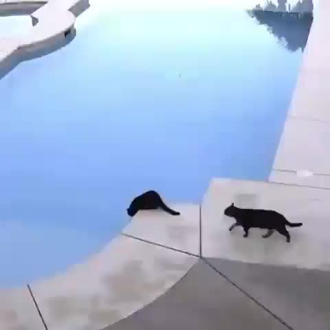 Watch and share Animals GIFs and Animal GIFs by Joker-22 on Gfycat