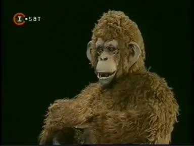 Watch rolando GIF on Gfycat. Discover more cha cha cha GIFs on Gfycat