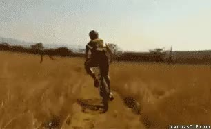 Watch and share Funny Deer Hits Bicycle GIFs on Gfycat
