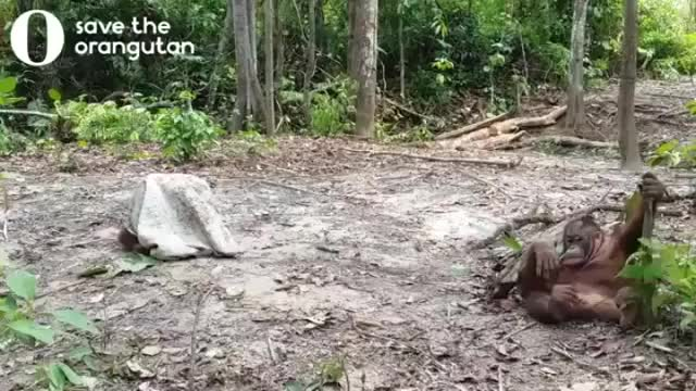 Watch and share Ape Ghost Caught On Camera GIFs by drzydrzy on Gfycat