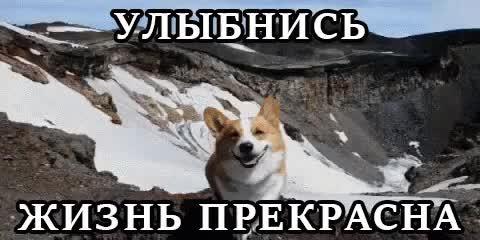 Watch and share Природа Собака Счастье Радость Улыбка Улыбнись Хорошо GIFs on Gfycat