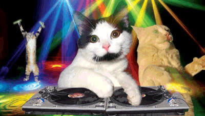 cat, dance, dj, night out, party, the club, turn up, Cat DJ GIFs