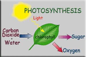 Watch and share LS.5 Photosynthesis GIFs on Gfycat