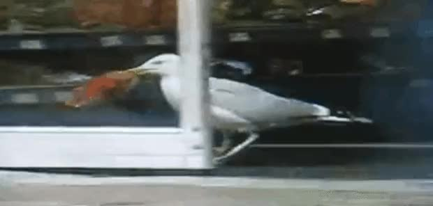 Watch and share Seagull GIFs and Gull GIFs on Gfycat