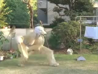 Watch Japanese Dog: Scoop, Scoop, Scoop. GIF on Gfycat. Discover more Commerical, Dog, Funny, Japanese, Potato, Potato Chip, Weird GIFs on Gfycat