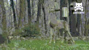Watch and share Deer Hunting GIFs on Gfycat