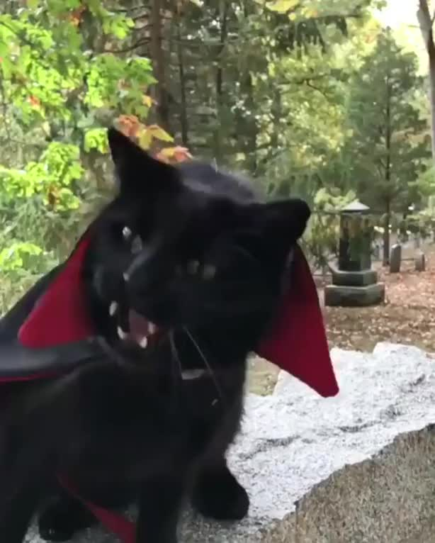 Watch and share Spooky Teefies GIFs on Gfycat