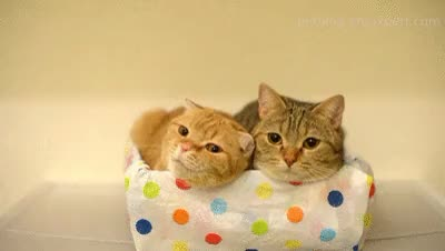 Watch Michelle and Maru are two sister cats that love to sleep in  GIF on Gfycat. Discover more cat, cats, cute, lazy cats, pet, pet blog, petcorner, pets, sleeping together, so cute GIFs on Gfycat