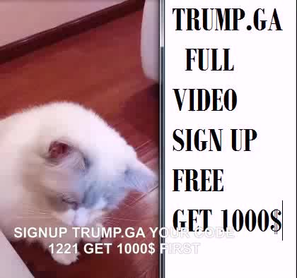 Watch and share Justchilling Gif GIFs and Cats GIFs by trump.ga on Gfycat