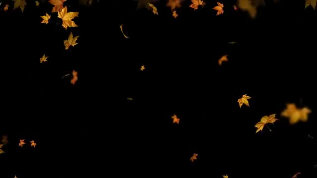Watch and share Autumn GIFs and Leaves GIFs on Gfycat