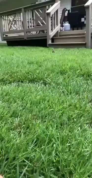 Cutest gif of the day - gif