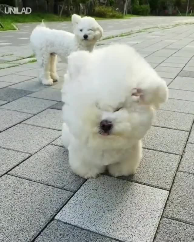 Watch and share Heavy Wind Blows Doggos Fur GIFs by GIFs For Everything on Gfycat