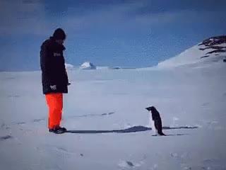 penguin, rocket,  GIFs